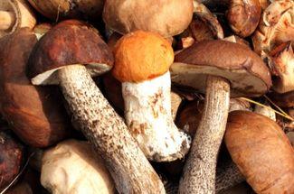 Какие грибы лучше замораживать, а какие сушить: грибник с большим стажем поделился опытом